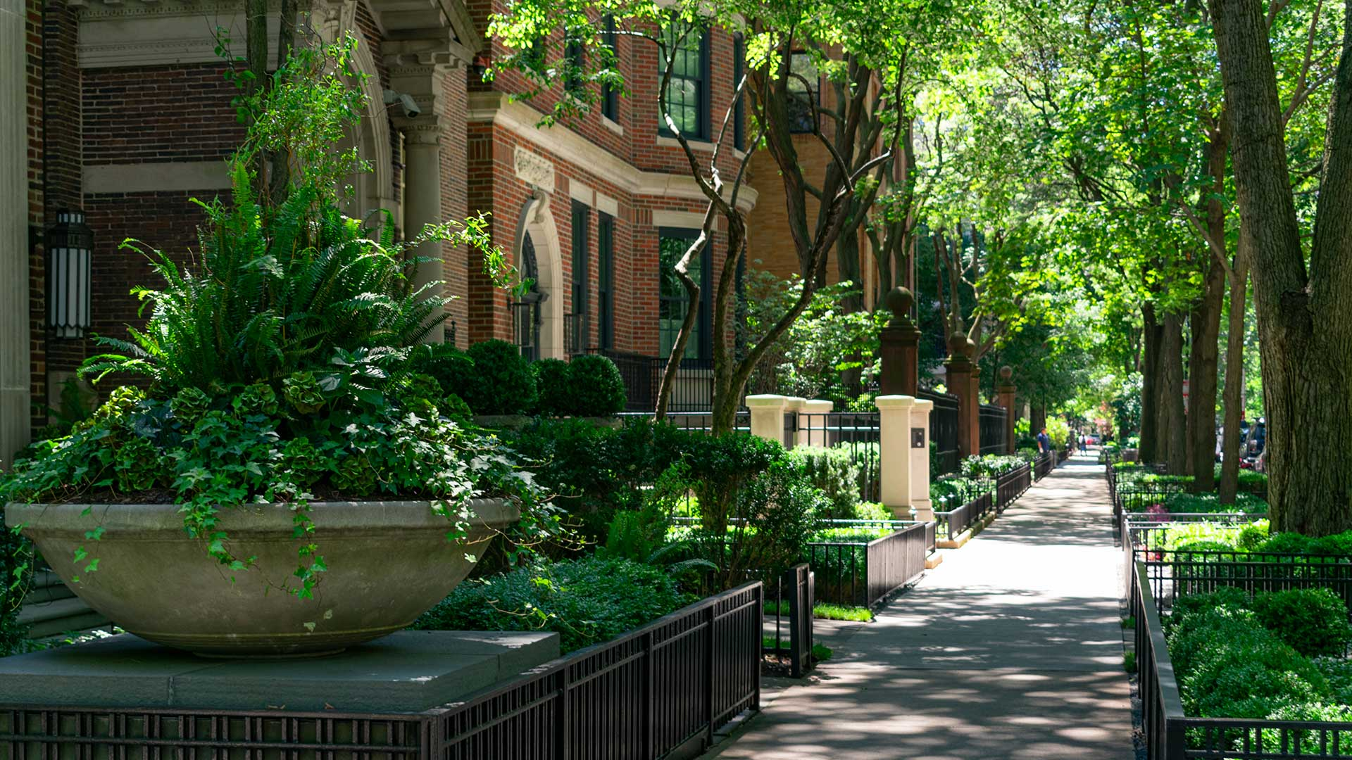 Looking down a sidewalk in the Gold Coast. Walkup buildings line the left side with green plants and trees all around.